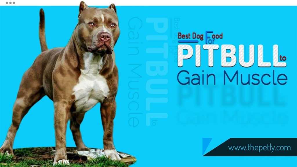 featured image of the Best Dog Food for PitBull to Gain Muscle
