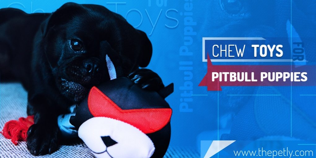 Image of the Best Chew Toys for Pitbull Puppies