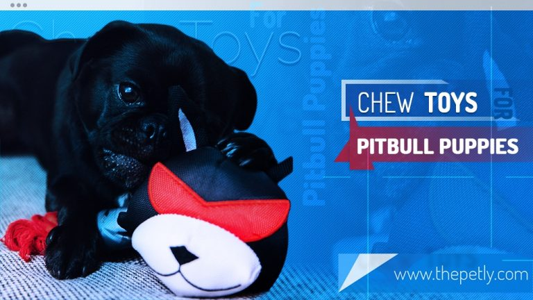 Best Chew Toys For Pit Bulls (Indestructible Dog Toys) in 2020