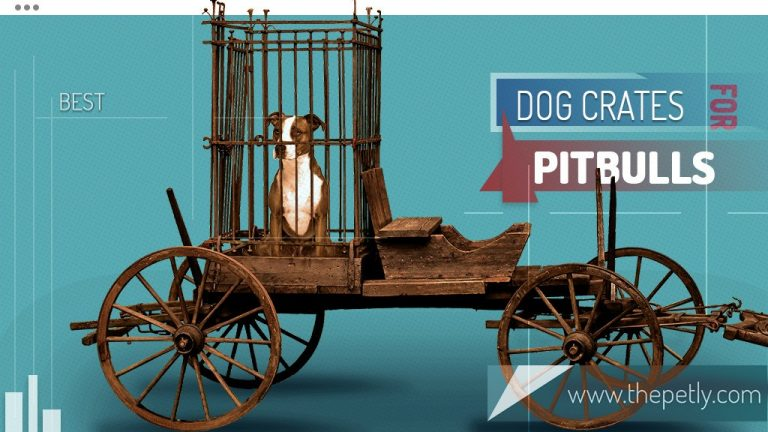 Indestructible Dog Crates For Pitbulls (Best Short Guide)