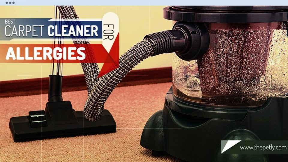 Cover Image of the article on the Best Carpet Cleaner for Allergies