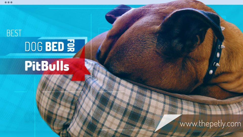 6 Best Dog Bed for PitBull: For Senior, Puppy, & Chewy! | Thepetly