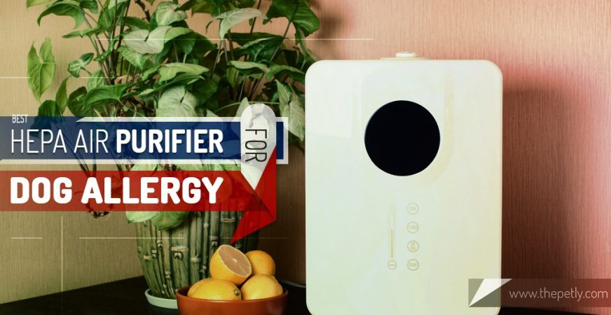 Cover Image of the article on the Best HEPA Air Purifier for Dog Allergy