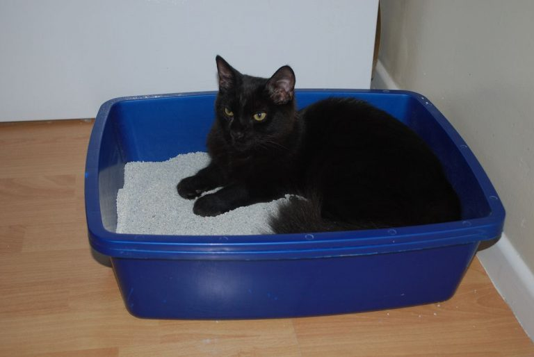 5 Best Non Clumping Cat Litter Review in 2020