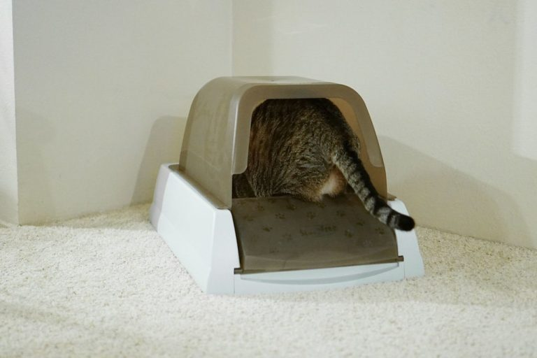 5 Best Litter Box for Odor Control Reviews [End Nasty Odors] in 2020
