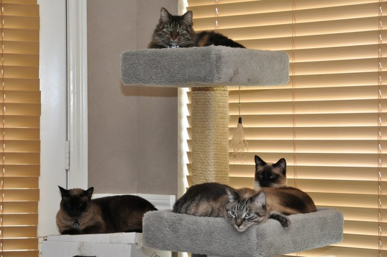 5 Best Cat Tree for Large Cats (Stable and Durable) 2020