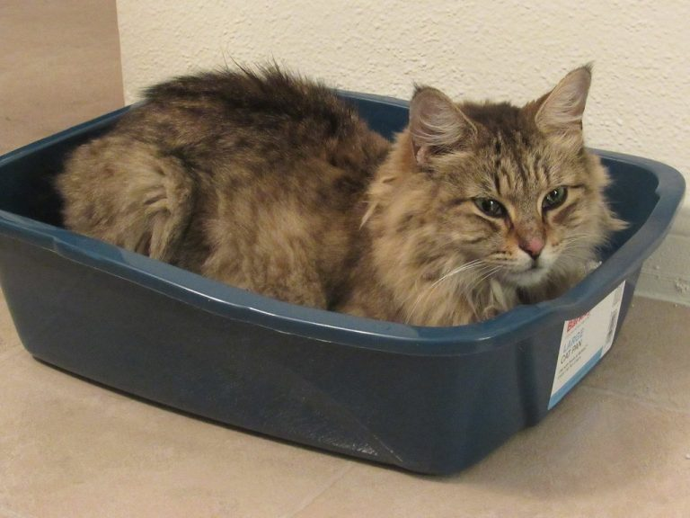 5 Best Choices – Litter Box for Large Cats (Extra-Large)