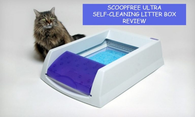 ScoopFree Original Self-Cleaning Litter Box Review