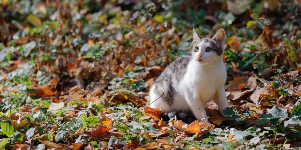 How to Get Rid of Worms in Cats