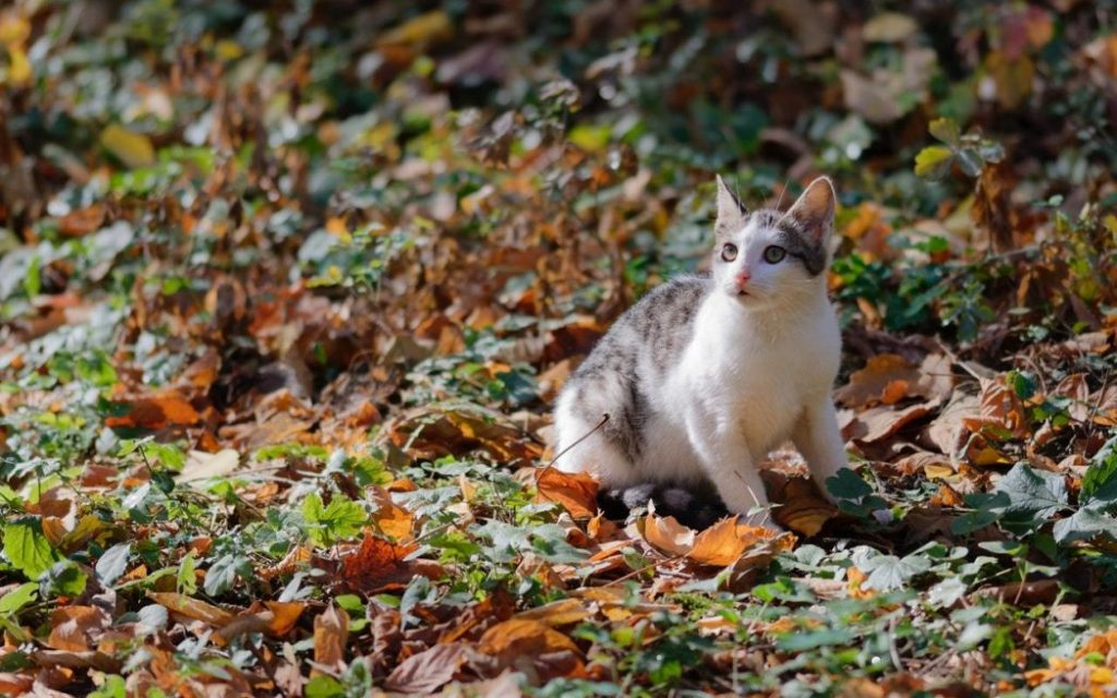cat outdoors in leaf litter