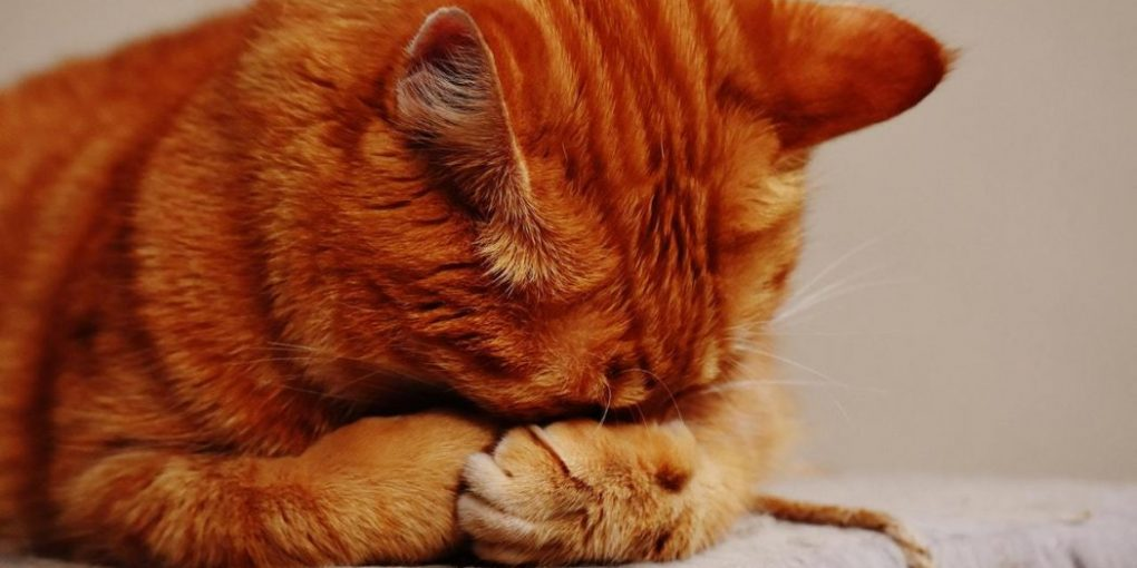 Cat diarrhea causes, symptoms and treatments