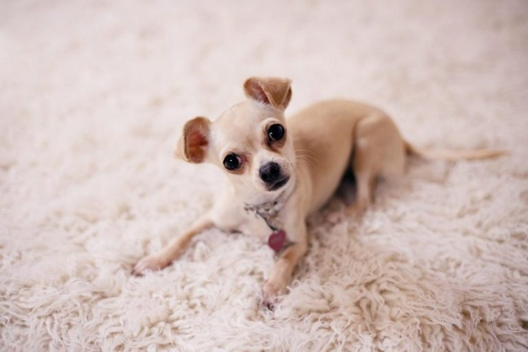 Carpet Cleaning Machines (5 Best for Removing Pet Urine)