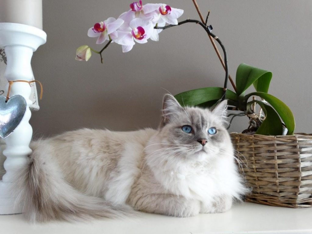 Female Cat with orchid