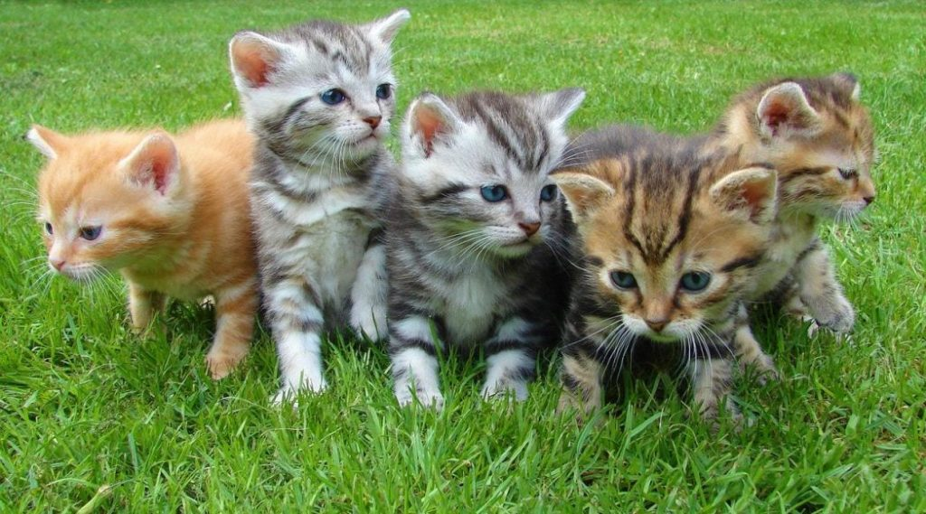 cute kittens in the grass