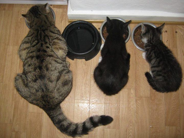 best kitten food reviews
