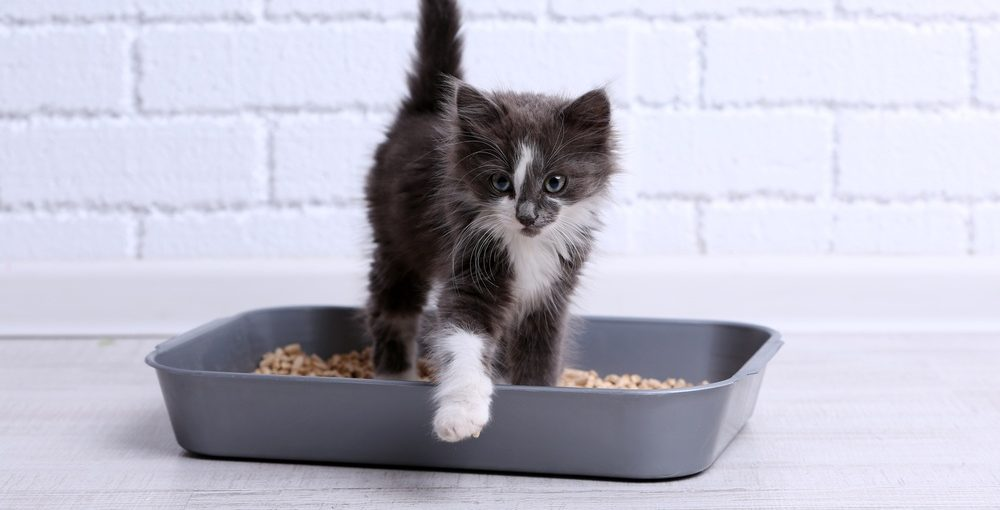 Best Litter Box for Multiple Cats Reviews