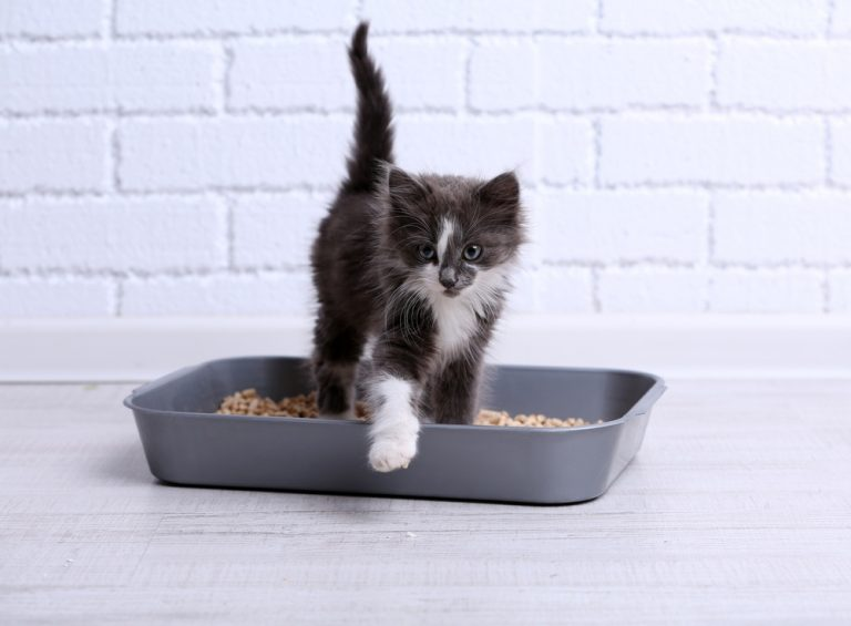 5 Best Cat Litter Box for Multiple Cats in 2020 [Scoop No More!]