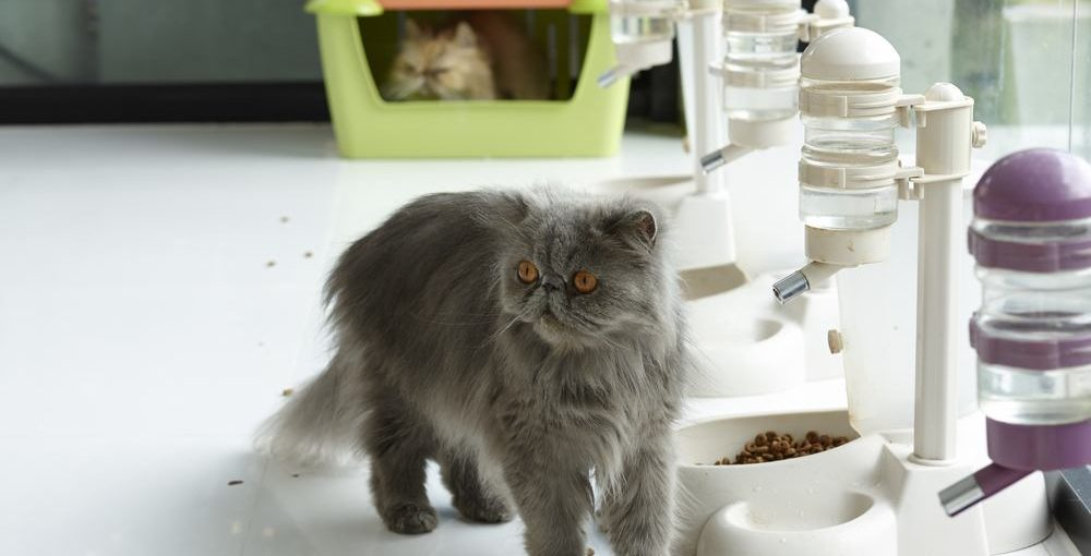 Best automatic cat feeder for two cats reviews