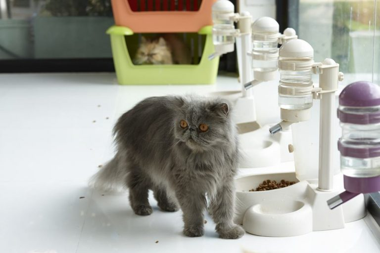 5 Best Automatic Cat Feeders: How do Multiple Cats Share Food?