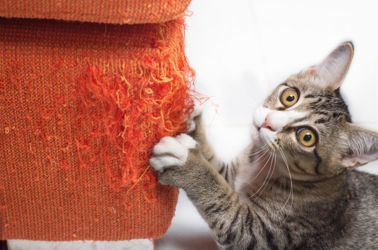 Cat Scratching Furniture: How to stop cat from scratching furniture