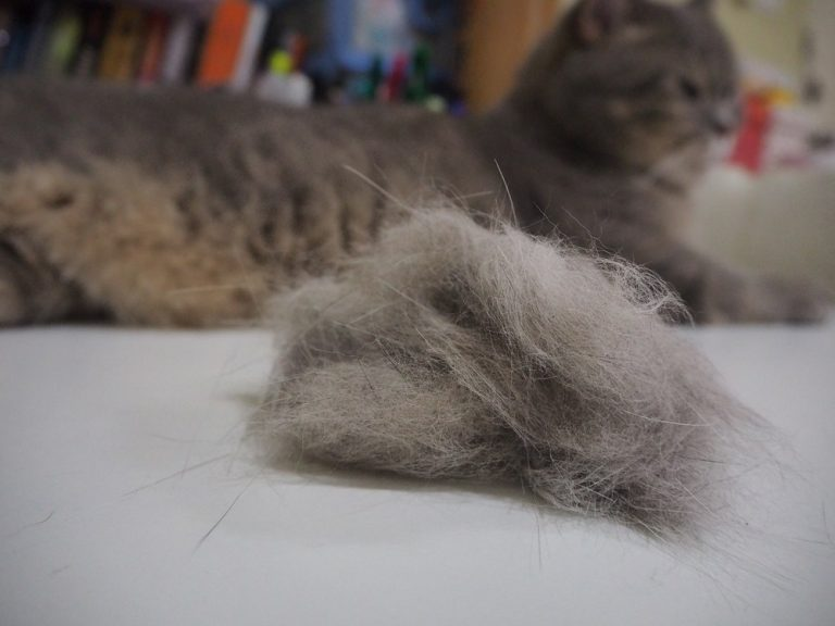 8 Home Remedies for Cat Hairballs (Insane Tricks) in 2020