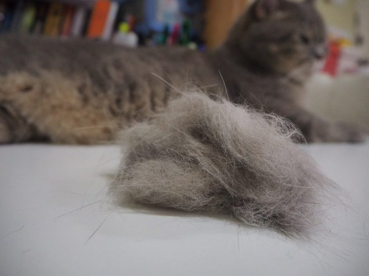 home remedies for cat hairballs