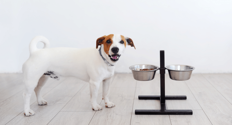 A dog with food bowls
