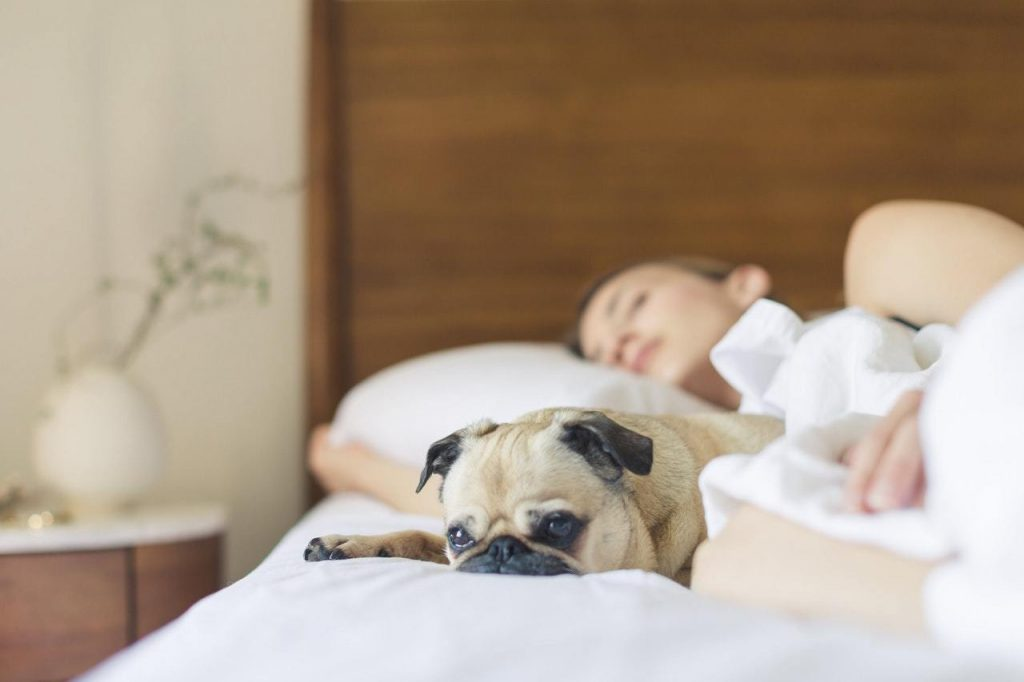 dog on bed with owner
