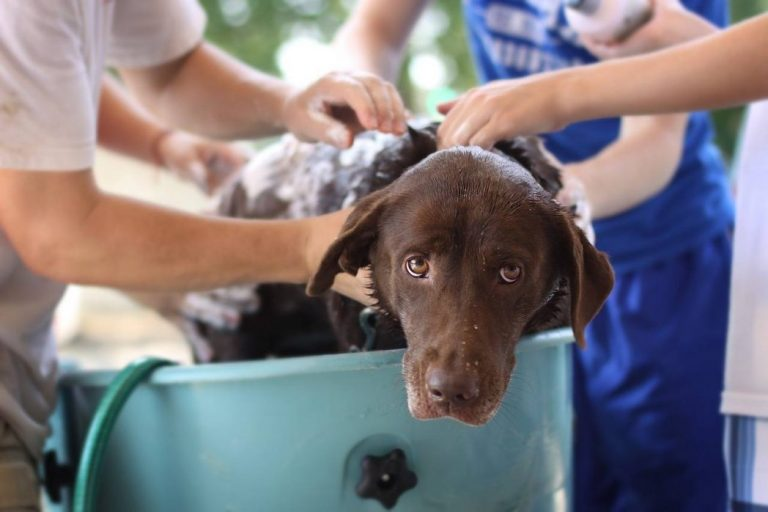 Can I Use Baby Shampoo on My Dog? (What You Need to Know)