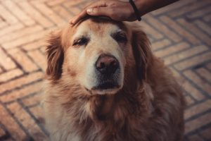 dog being patted