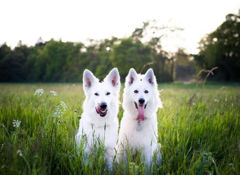Dog Grass Allergy: Causes, Symptoms and Treatment.