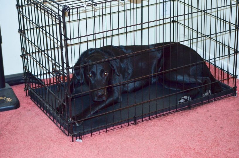 How to stop dog barking in crate