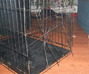 Broken Dog Crate