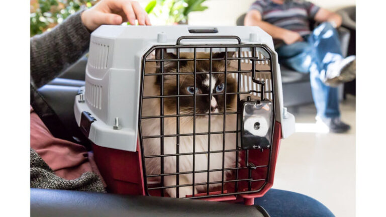 Best Cat Carrier for Anxious Cats (Cats Who Hate Carriers)