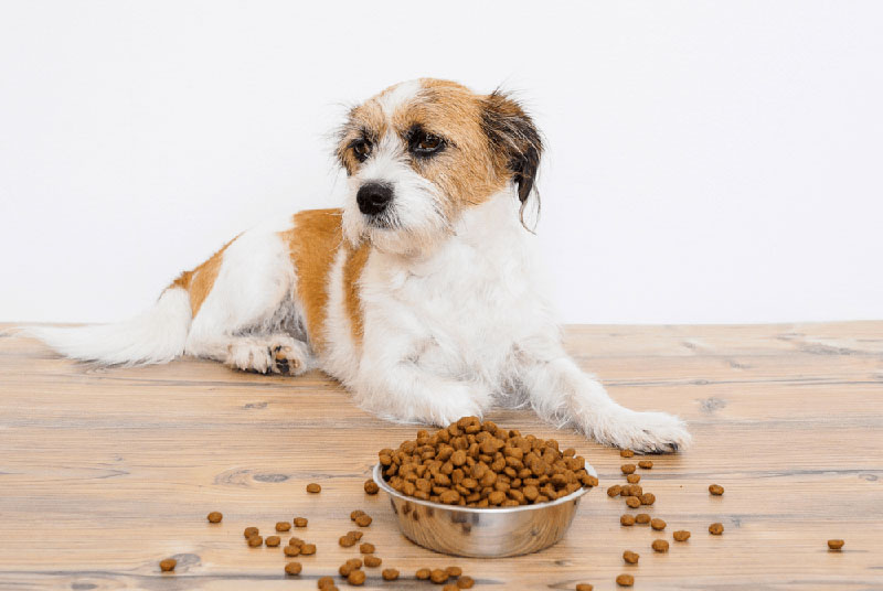 dog with full food bowl