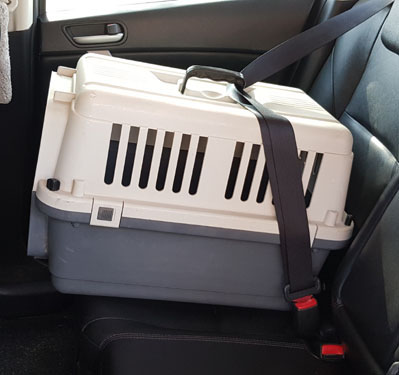 pet carrier on car seat